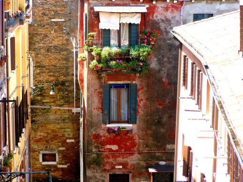 The Contrast Of Fresh And Ancient Colour. The colour and freshness of living blooms gives life to the ancient flaking paint seen from the rear window of my suite in the Hotel Tiziano, Dorsoduro 1873, Calle Riello Cannaregio, 30123 Venezia. https://witness.theguardian.com/assignment/552ffc8ee4b0a04dcffa9587/1486943