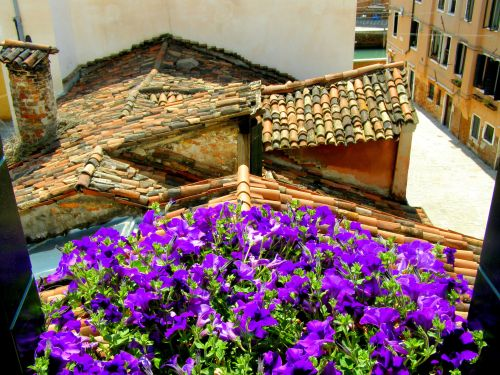 Fresh Morning View. The fresh, colourful and vibrant morning view from the side window of my suite in the Hotel Tiziano, Dorsoduro 1873, Calle Riello Cannaregio, 30123 Venezia. https://witness.theguardian.com/assignment/552ffc8ee4b0a04dcffa9587/1486940