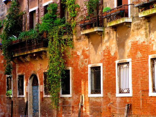 A Fresh Venetian Perspective. The unhindered growth of living plants breathes fresh life into this otherwise indistinguishable and anonymous Venetian canal where green wins the competition with blue. https://witness.theguardian.com/assignment/552ffc8ee4b0a04dcffa9587/1486946